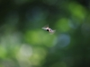kleiner flinker Flieger