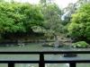 ein Teich mit Kiefer