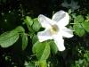 ...mit seinen vielen Kräuter- und Heilpflanzen