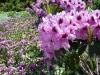 die Blumen strömen einen betörenden Duft aus