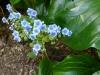 blaue Blümchen am Ausgang