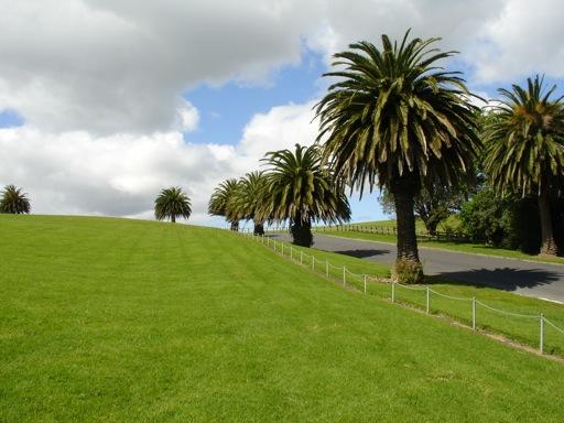 die Straße des Memorial Garden ist von Palmen gesäumt
