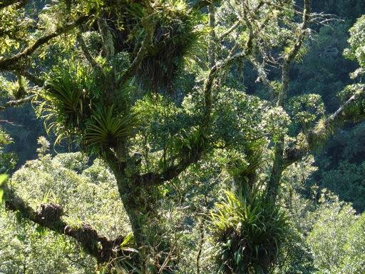 der Raparapahoe Walk führt durch dichten Regenwald...