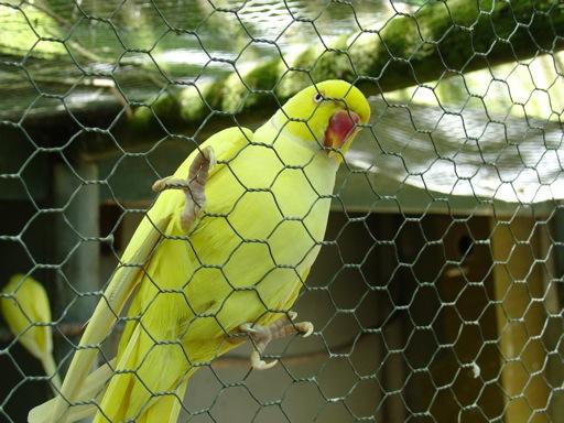 ...und Papageien