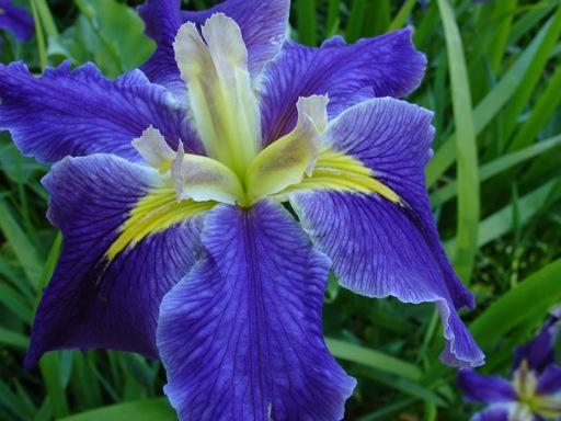 darüber hinaus wachsen hier Orchideen...