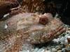 ...und der marinen Tierwelt
