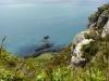 Blick vom Mt. Maunganui auf den Pazifik...