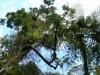 Spaziergang im McLaren Falls Park