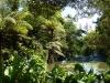 im Katikati Bird Garden gibt es mehrere Teiche für Vögel