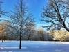 ...mit seinen zahlreichen Bäumen...