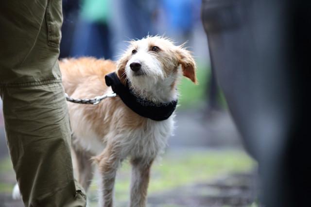 ein Hund demonstrierte mit
