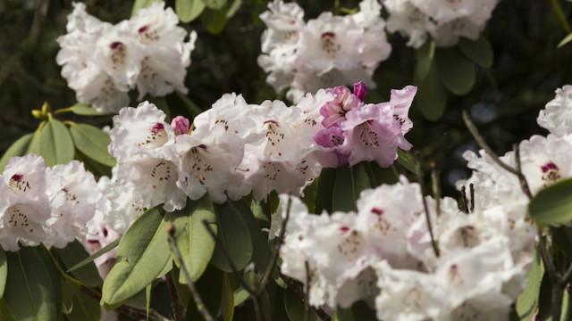 Strauch mit Blüten