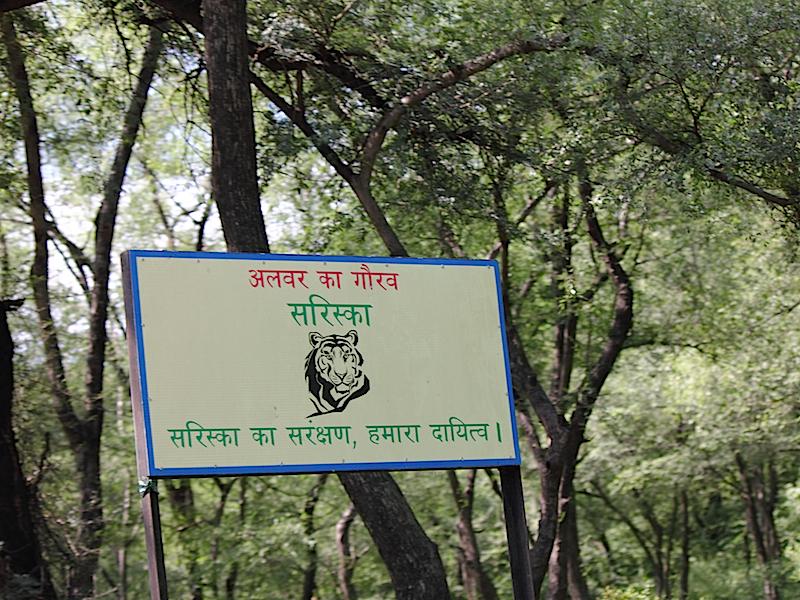 Schild mit Tigerkopf